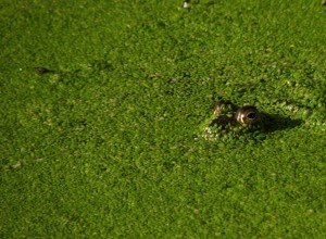 Frog (1024x752)