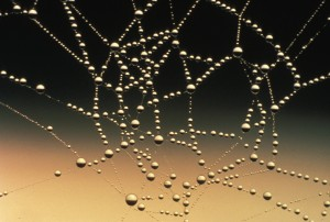 Spider web covered with dew drops